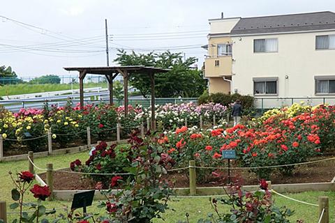file_name-okudo-flowerpark.jpg
